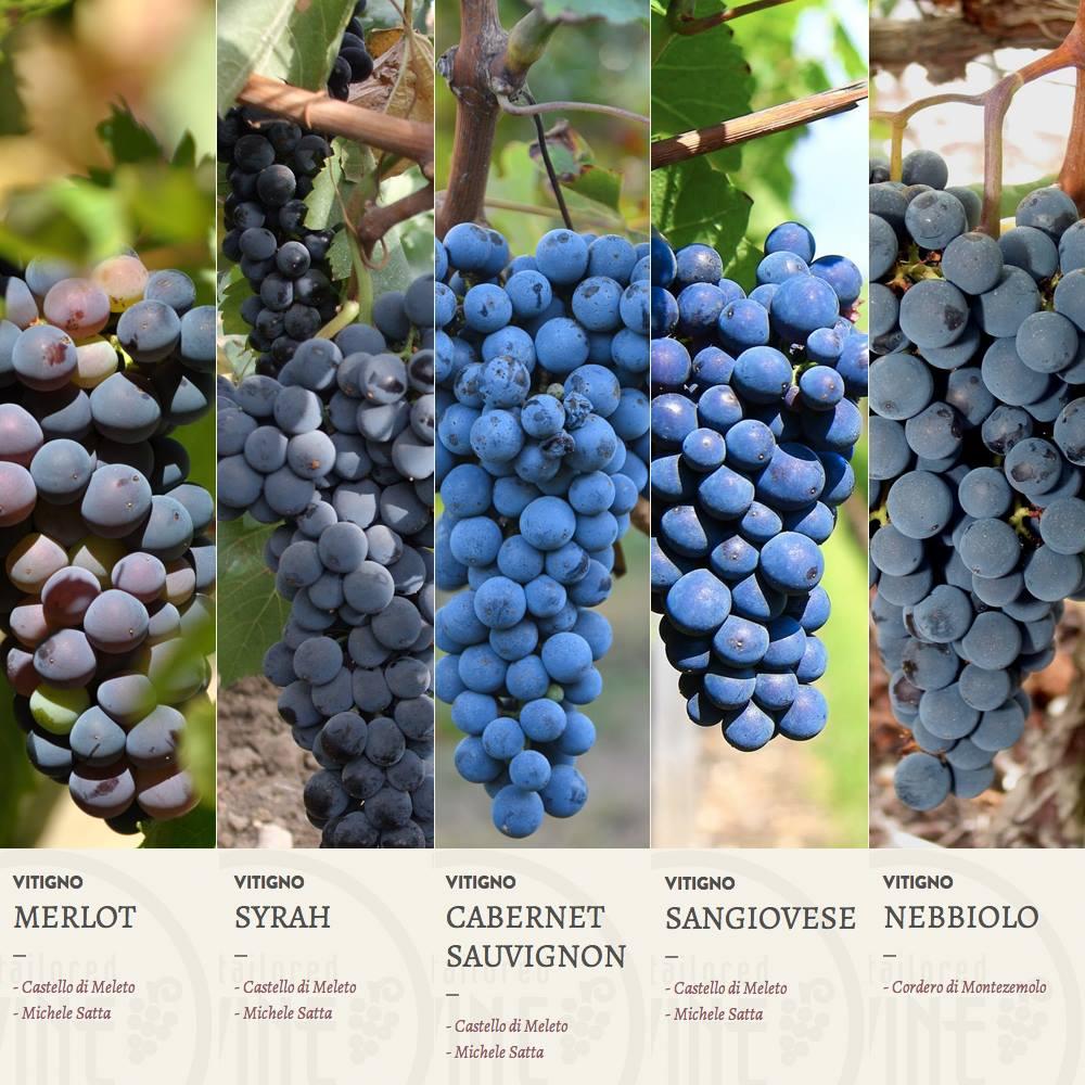 MyTaylored Wine – Sottomarini Digital – Lorenzo MArini Group